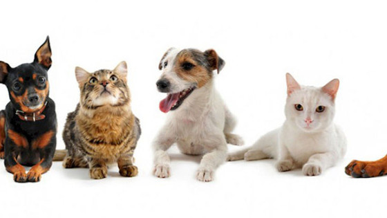 Top 5 Reasons to Adopt A Shelter Pet