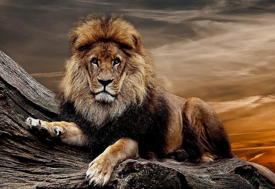 lion20.jpg