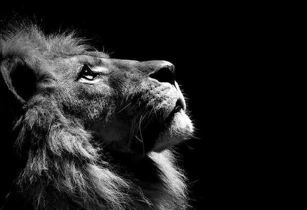 lion21_edited.jpg