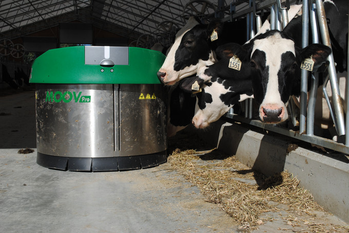 Cows checking out the JOZ Moov Pro feed pusher