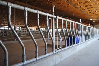 Artex Sloped Feed Rail for heifers