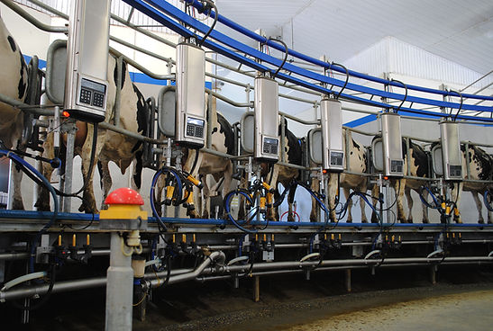 CR Rotary Interior Milking.jpg