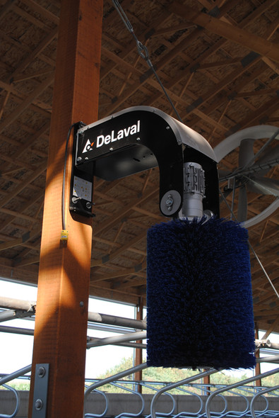 1 of 12 DeLaval Swinging Cow Brushes in the new cow barn