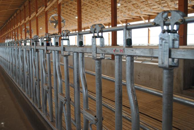 Artex Headlockers in the new barn