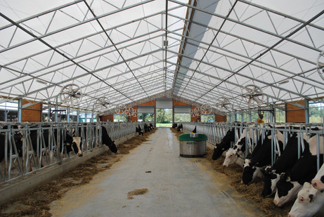 Overview of the feed alley