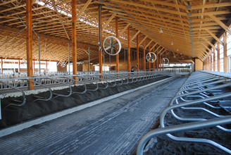 Stalls with sand in them waiting to be leveled before cows move in