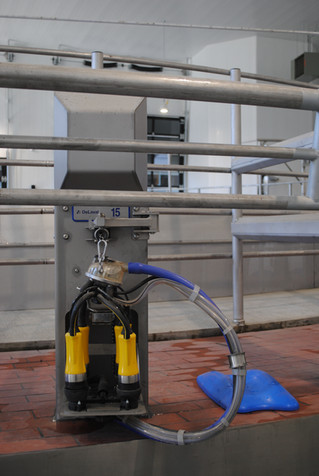 An ADF Milking Cluster and Cow Locator in one bail on the rotary
