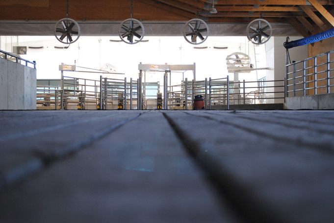 The holding pen leading up to the rotary deck