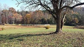rustling meadows.jpg