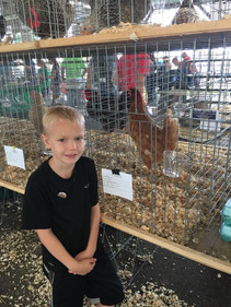 boy and his award winning chicken at the harford county 4-h farm fair