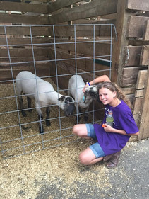 girl and her sheep at the harford county 4-h farm fair