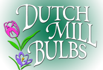 Dutch Mill Bulbs Spring Fundraiser is on!
