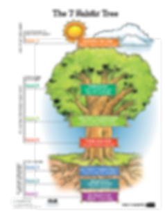 leader tree.png