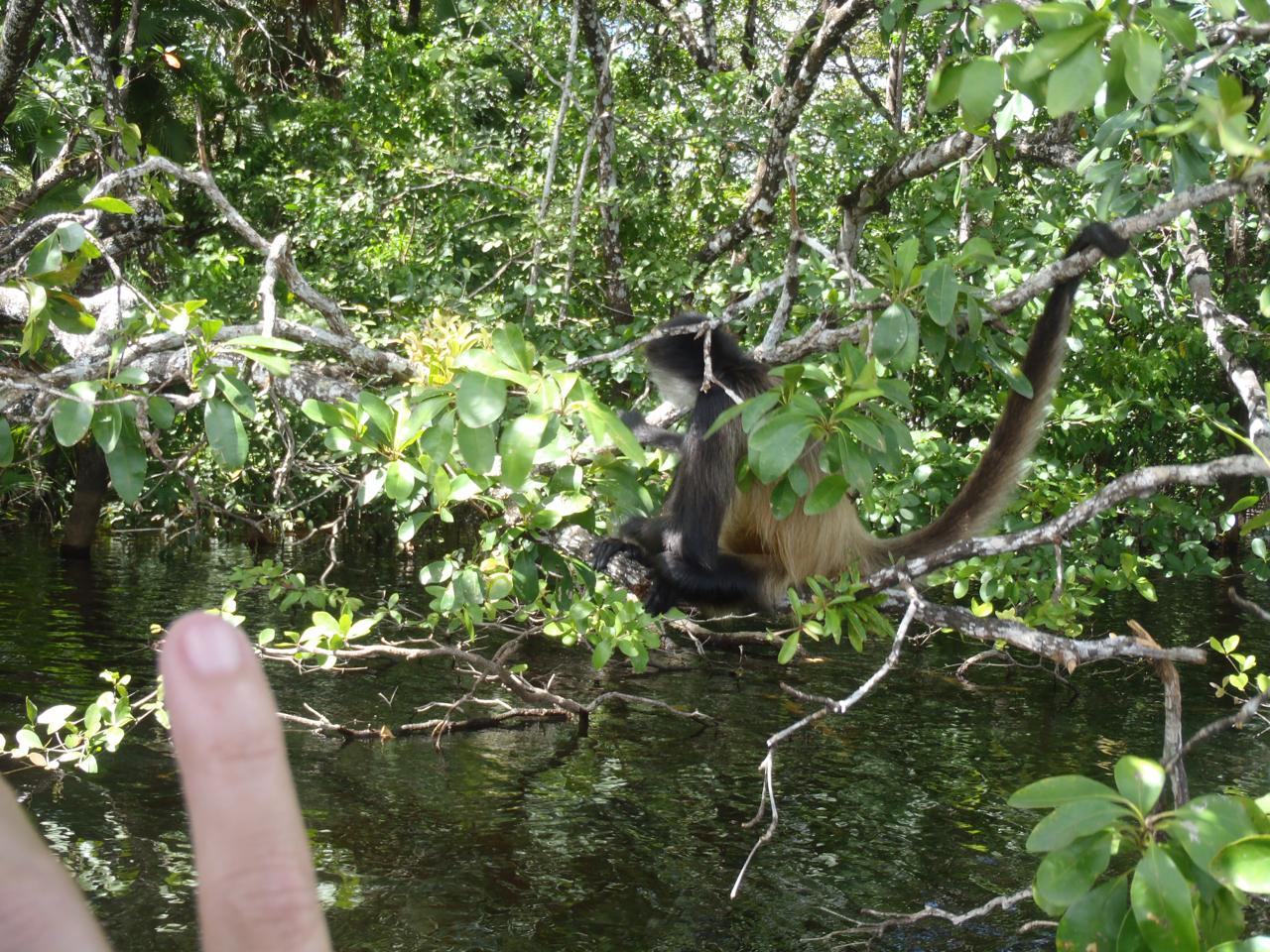 Belize Mainland Tour Lamani Pictures - 37 of 64