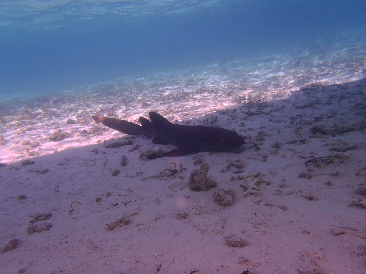 Photos of snorkeling and fishing in Belize shark Ray alley and Hol chan - 13 of 114