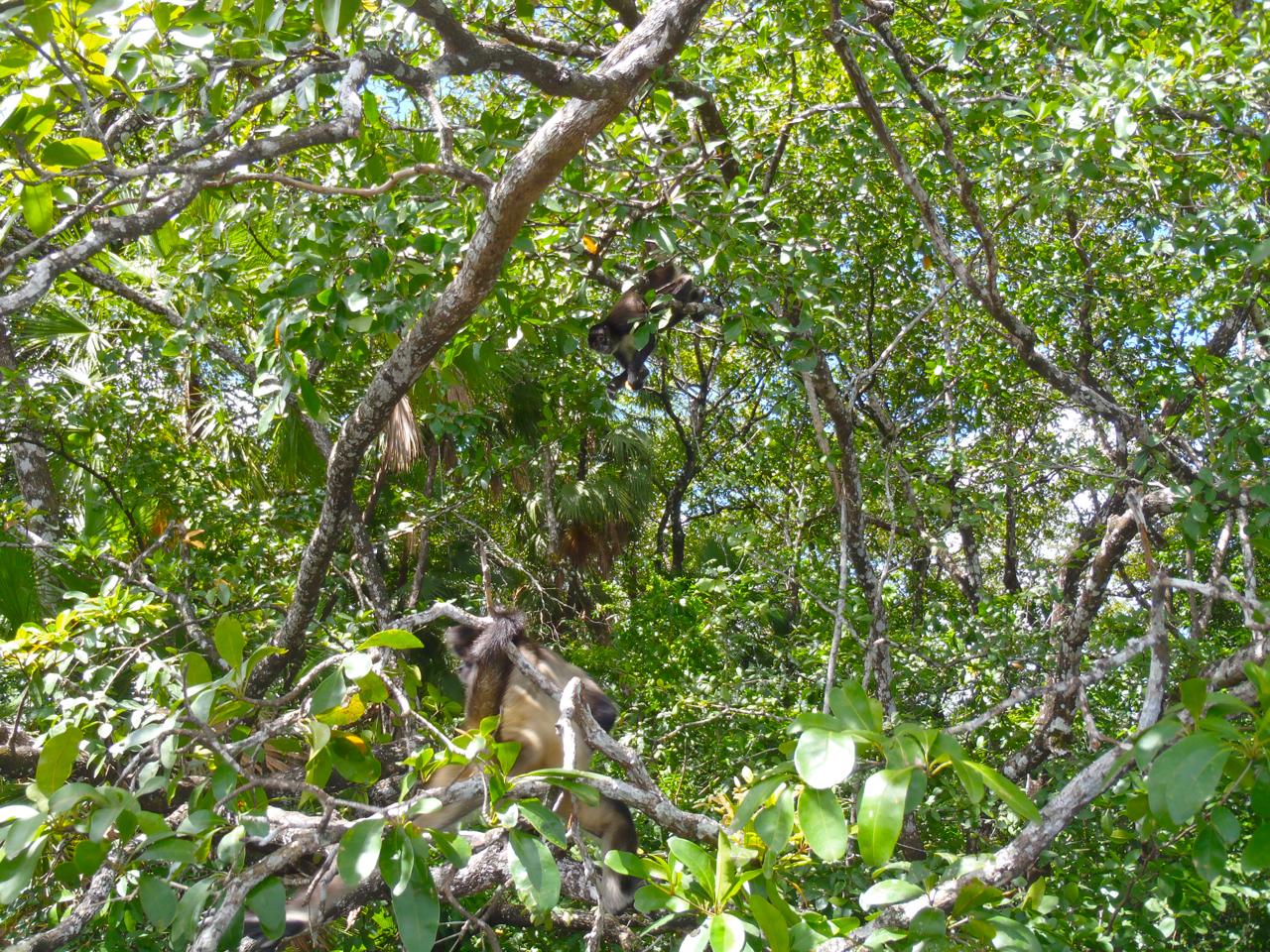Belize Mainland Tour Lamani Pictures - 38 of 64