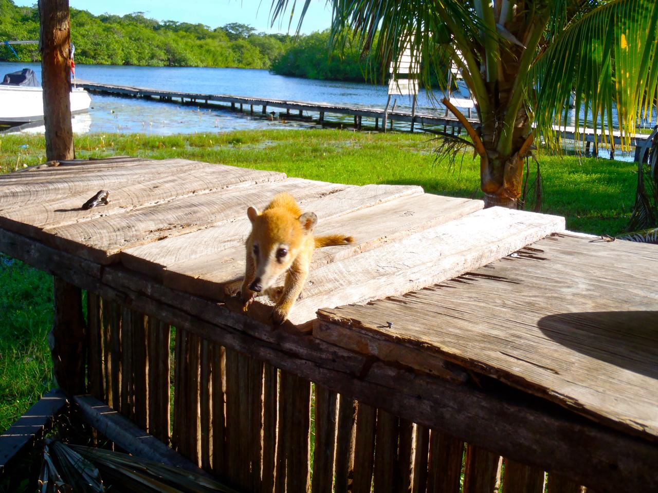 Belize Mainland Tour Lamani Pictures - 46 of 64