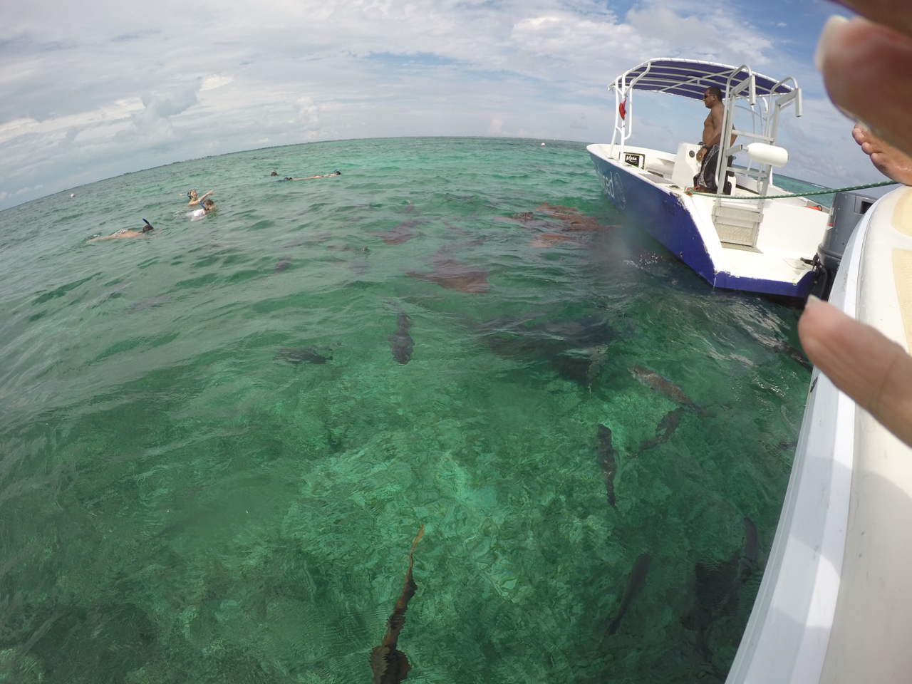 Photos of snorkeling and fishing in Belize shark Ray alley and Hol chan - 32 of 114