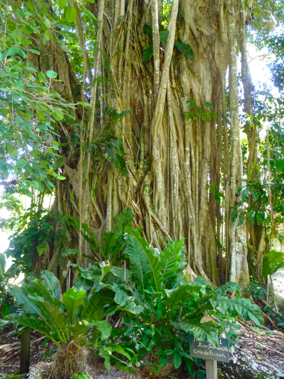 Belize Mainland Tour Lamani Pictures - 52 of 64