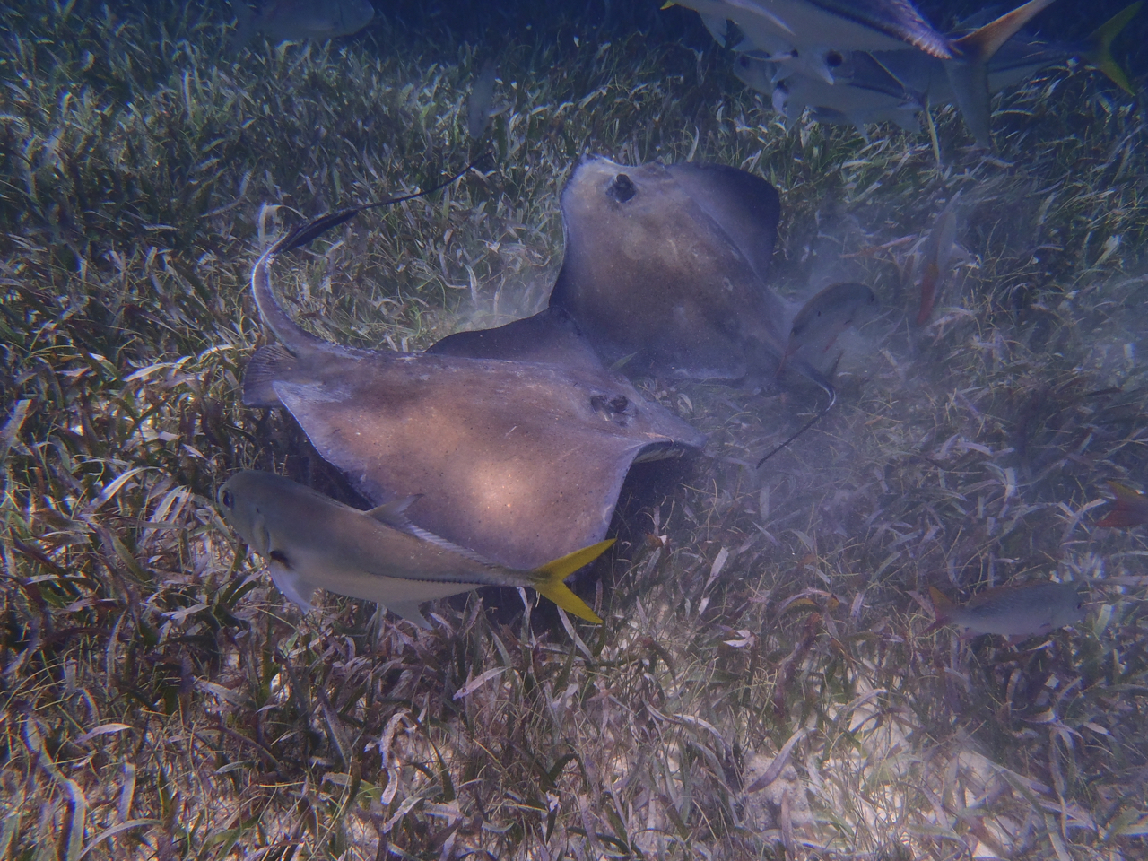 Photos of snorkeling and fishing in Belize shark Ray alley and Hol chan - 52 of 114