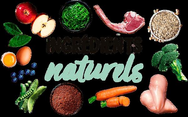 O_web_ingredientes_fr.png