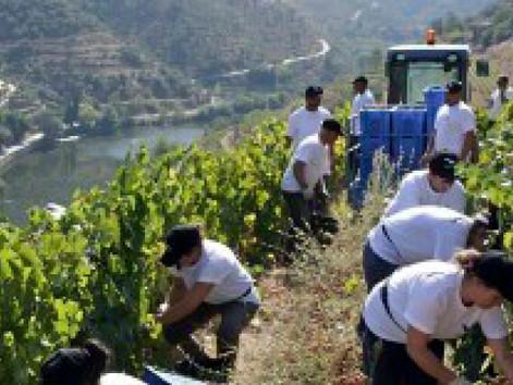 Produtores de vinho de Portugal buscam atrair consumidor do Sul