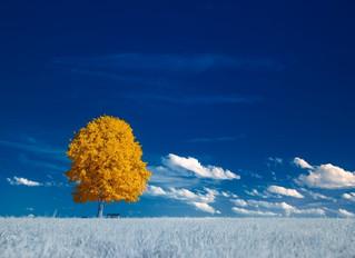 ¿Qué es una experiencia emocional correctiva y cómo se relaciona con el cambio terapéutico?