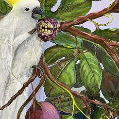 Cockatoo detail