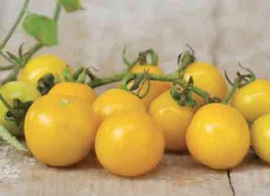 Hartman's Yellow Gooseberry