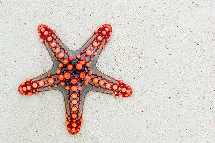 starfish-74535_960_720.jpg