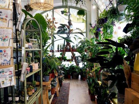 Tchungle : la jungle urbaine strasbourgeoise