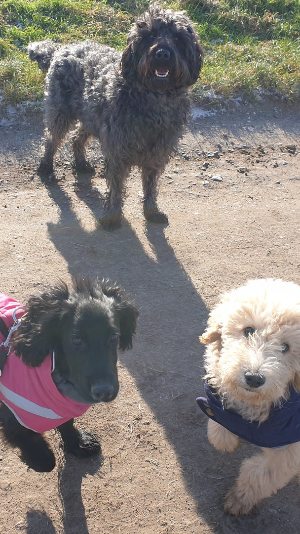 Happier Hounds dog walking