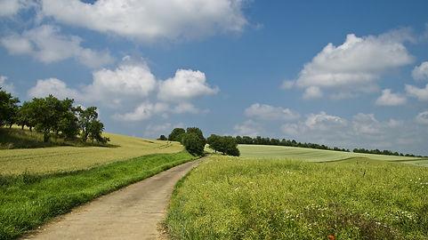 field-175959_1920.jpg