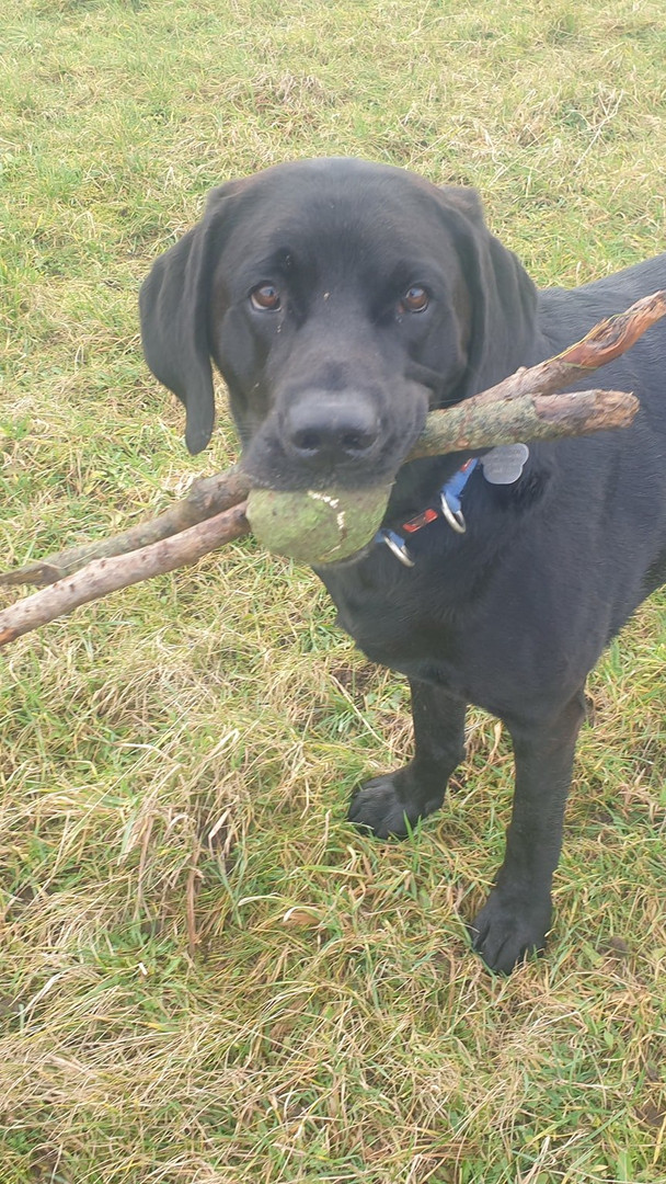 Happier Hounds Sticks and Ball