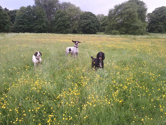 Dog walk in Wroughton