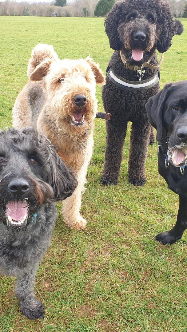 Group walk Happier Hounds Swindon
