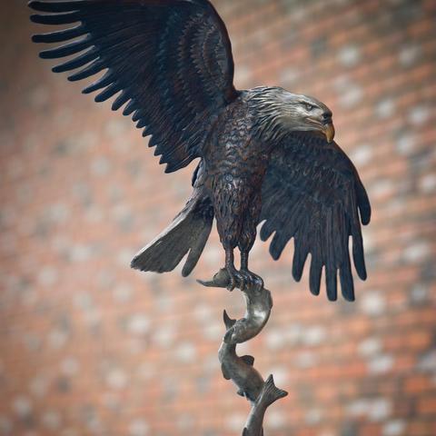 Food Chain Eagle