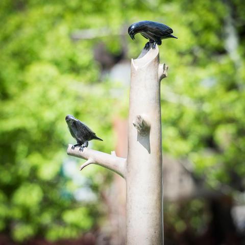 Talking Crows