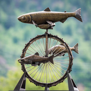 Salmon Cycle