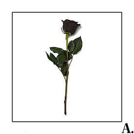 Amorie - VOL.jpg