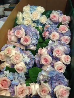 blue pink box