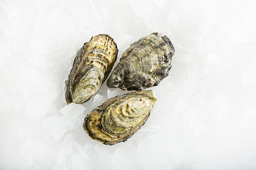 Closed Live Oysters (Dozen)