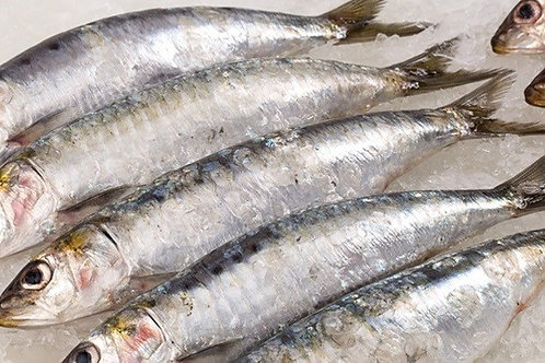 Wild Caught Sardines (1kg)