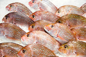 Whole fish, fresh fish, frozen fish, filets, portions, Melbourne Seafood