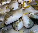 fish-3088483_1280.jpg
