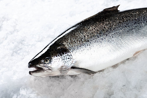 LARGE - Whole Salmon Tasmanian (6.5kg+)