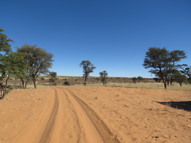 Kalahari_road.jpg