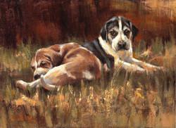 Fox Hound Pups 8 x 11