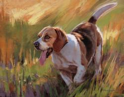 Run, Beagle, Run 11 x 14