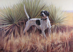 Pointer and Yucca 19 x 26